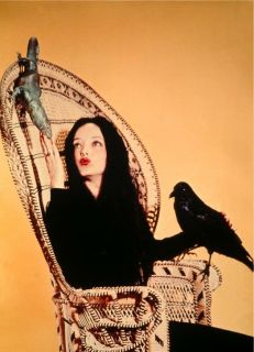 THE ADDAMS FAMILY TV Poster Morticia The Munsters Lurch Fester Goth