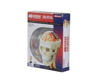 Brain & Cranial Nerve Anatomy 4D Puzzle Educational Toy Model 39 Parts