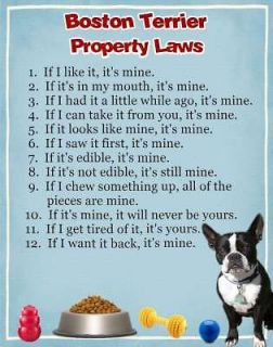 BOSTON TERRIER Dog Magnet Property Laws Personalized With Your Dogs